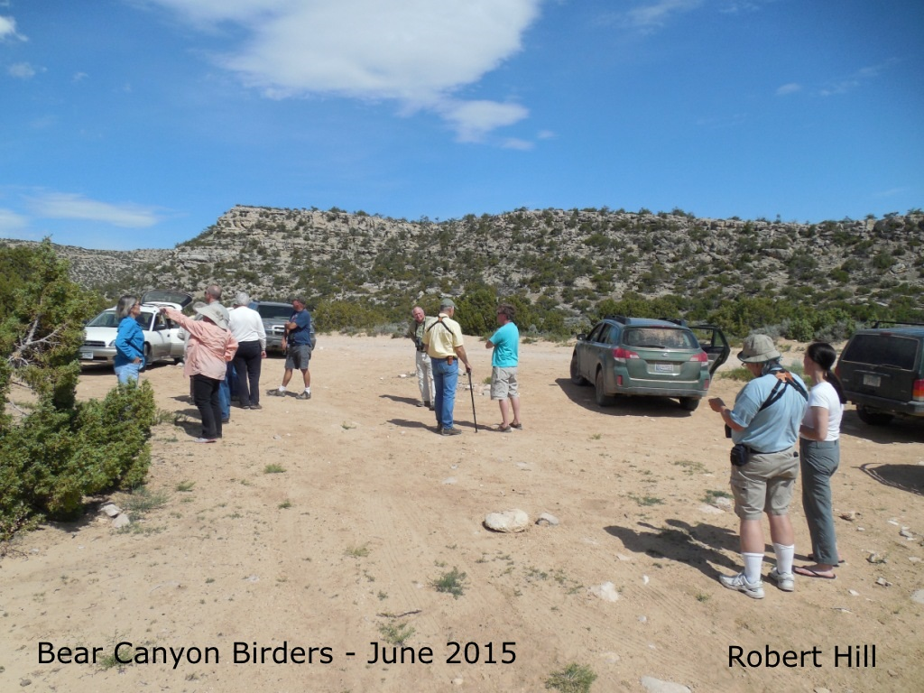 R. Hill - Bear Canyon Birders June 2015