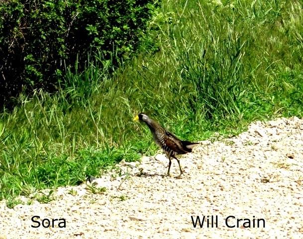 W. Crain - Sora