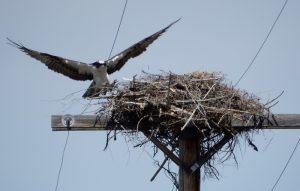 new-nest-1-050516-g-mowat-resized