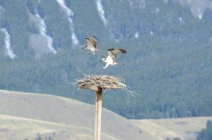 nest-172-1-lochleven-by-jackie-gardner-resized