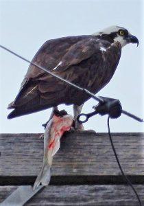 new-nest-oscars-5-30-16-george-mowat-resized-enhanced