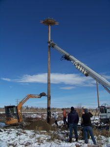 cottonwood-ranch-new-pole-platform-4-d-regele